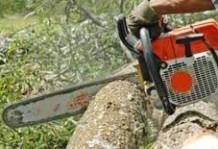 Calificare operator la recoltarea și toaletarea arborilor forestieri (drujbist)